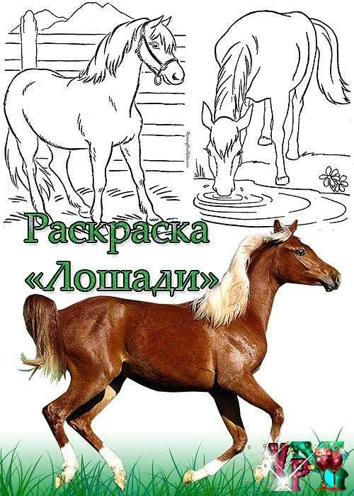 Раскраски лошади раскраски лошади от