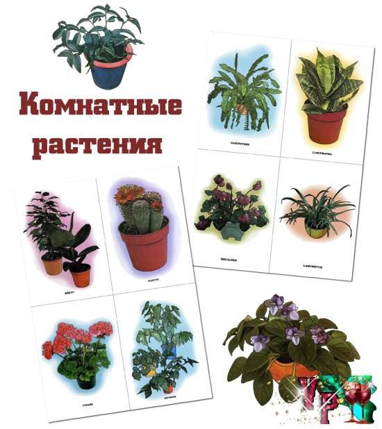 тему - Комнатные растения