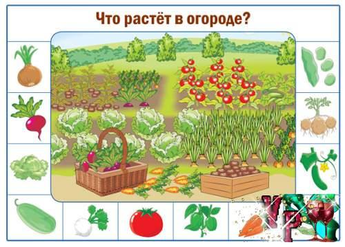 Плакат для дошкольников в детский сад - Что растет в огороде