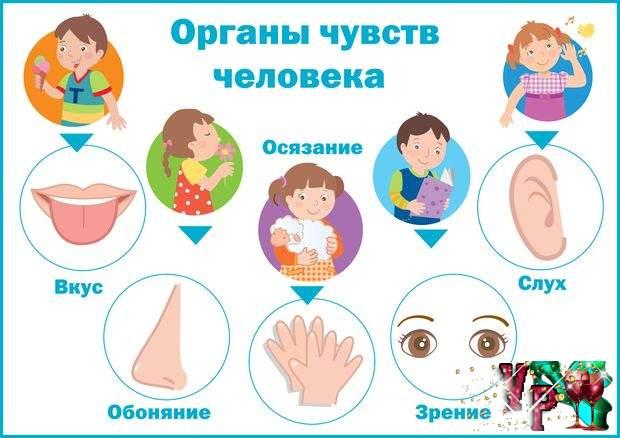 части тела знакомство с ними в детском саду