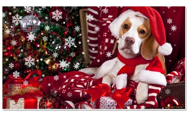 Символ 2018 года: собака. Красивые картинки, фото и видео с новым годом 2018