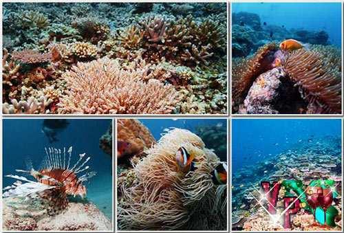 Красивые картинки – Морская жизнь