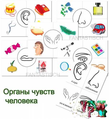 Дидактическая игра для детей Органы чувств человека