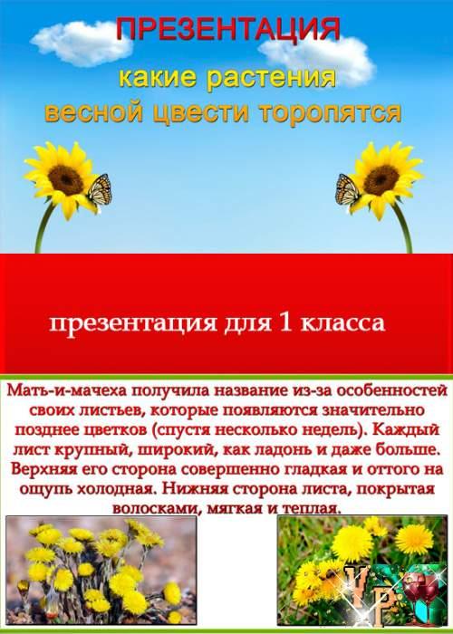 Презентация - Какие растения весной цвести торопятся. Для 1 класса пнш