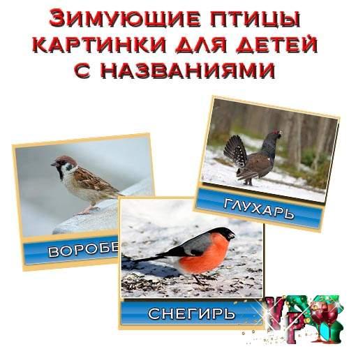 Зимующие птицы картинки для детей с названиями