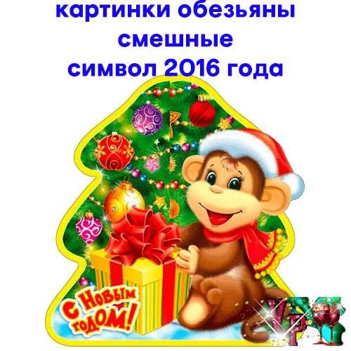 Картинки смешные обезьяны. Картинки символ 2016 года