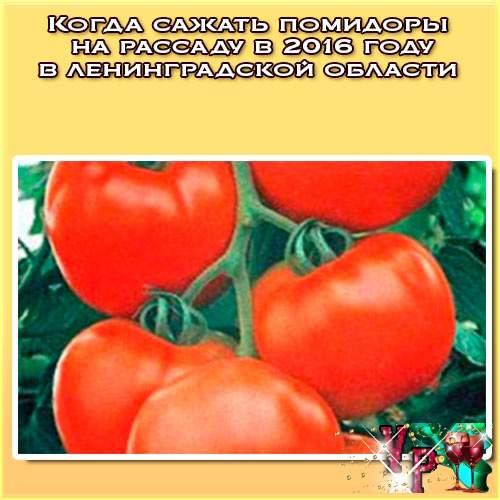 Когда сажать помидоры на рассаду в 2018 году в ленинградской области? Огород 2018