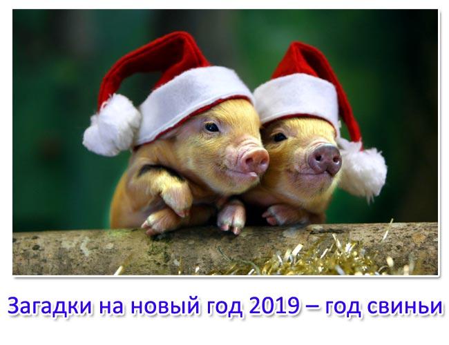 Загадки на новый год 2019 – год свиньи. Загадки с ответами