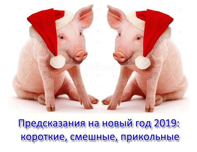 Предсказания на новый год 2019: короткие, смешные, прикольные. Предсказания на год свиньи